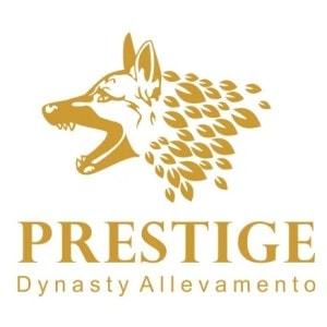 Dog logo - Prestige