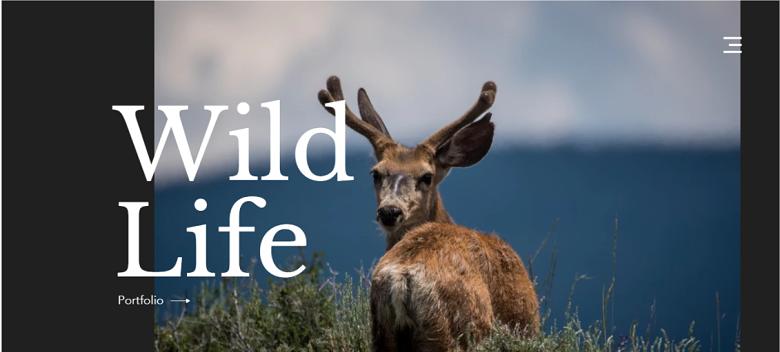 Wix Wildlife Photography Homepage